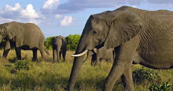 Masai Mara Game Reserve, Kenya  № 3362318  скачать