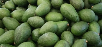 SAD: University graduate selling avocados cries for a job