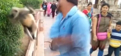 Savage! Man gives food to friendly monkey then PUNCHES it hard in face (photos, video)