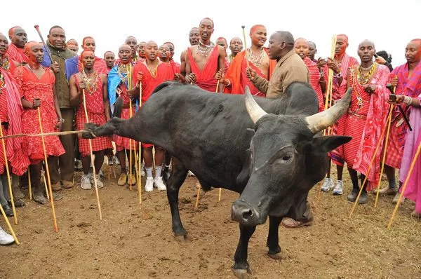President Uhuru set to pay bride price in Maasai land, details