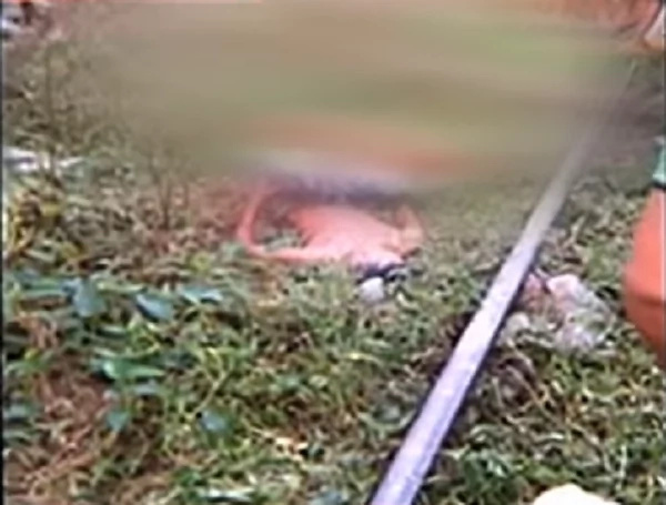 teenagers-hit-by-train