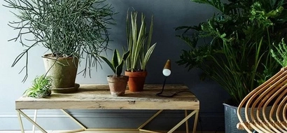 NASA published the list of plants that are the best air cleansers. They must be in every home!