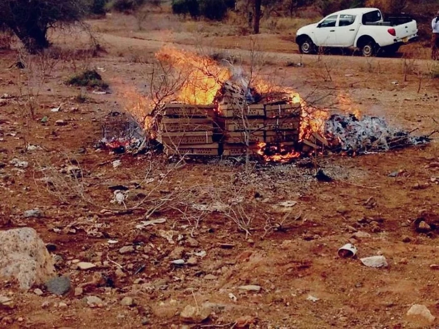 Tanzania burns KSh 0.5 million worth of chicks from Kenya again