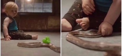 Fascinating research shows babies aren't innately afraid of snakes