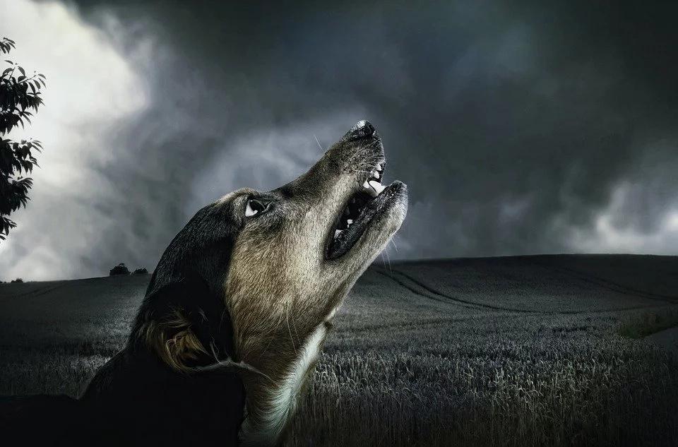 Hasta los animales se aterran viendo El Conjuro