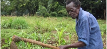 Still going strong! Meet 108-year-old man who still tills his farm and hasn't fallen sick in 55 years