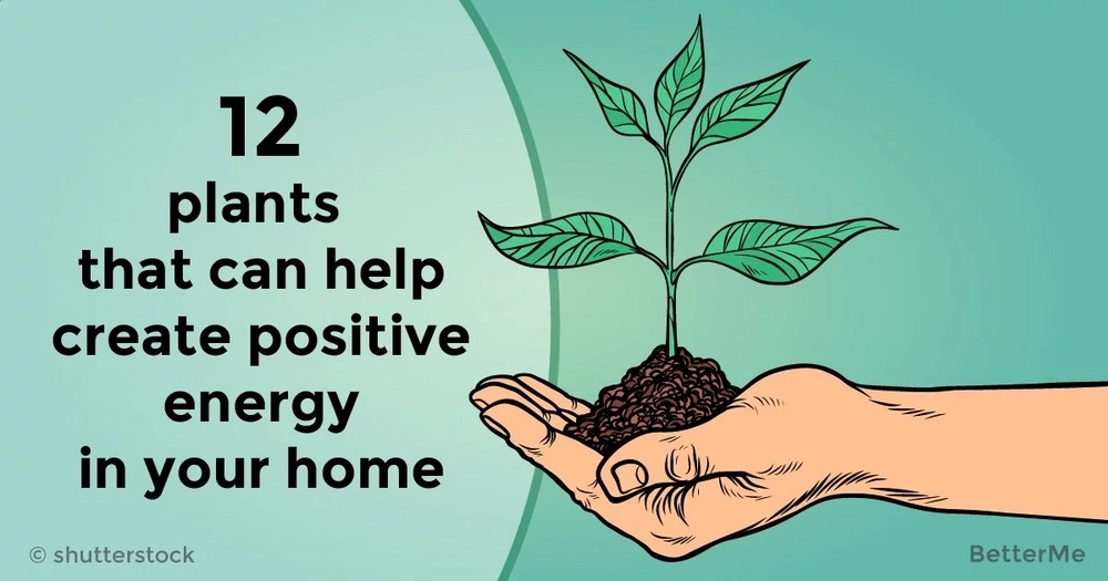 12 plants that can help create positive energy in your home