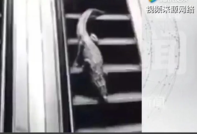 Caught on camera! Alligator escapes from its tank, roams around supermarket as customers watch