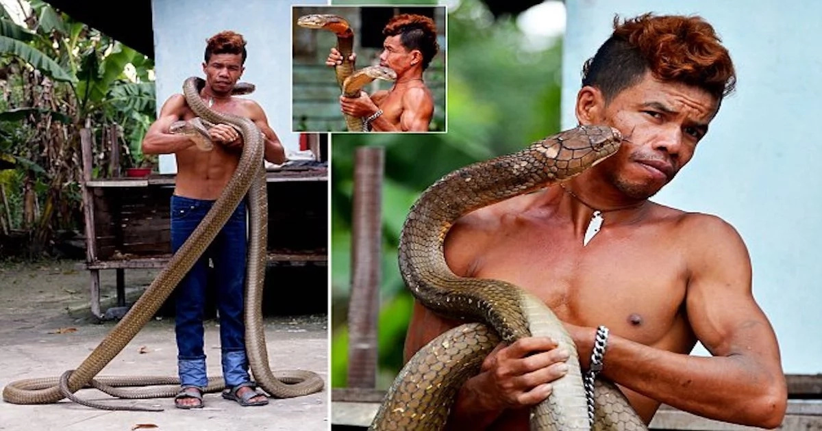 This takes guts! Meet snake charmer who pets giant king cobras, defangs them with bare hands (photos, video)
