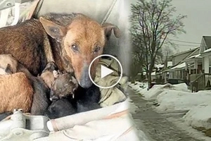 Dog's maternal instincts take over as she saves abandoned 1-month old baby from freezing by keeping her warm with her pups