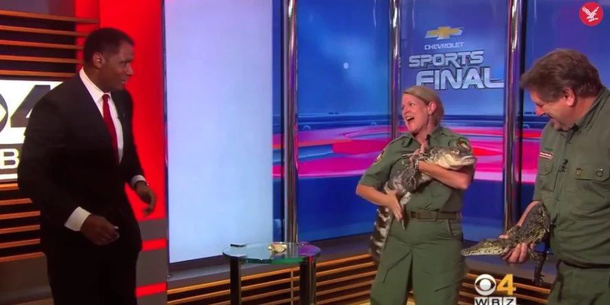 This reporter wrestled an alligator on live TV
