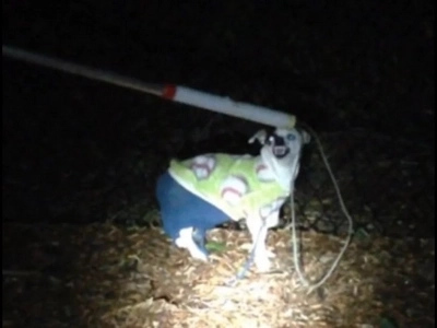 Dog Found Wearing Pants And Sweater Looking For Its Owner