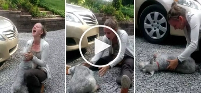 VIDEO: This emotional dog CRIED and FAINTED when its owner returned home after 2 years!