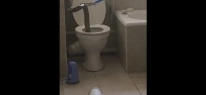Huge Cobra Terrorizes Toilets Of Entire Apartment Block in South Africa
