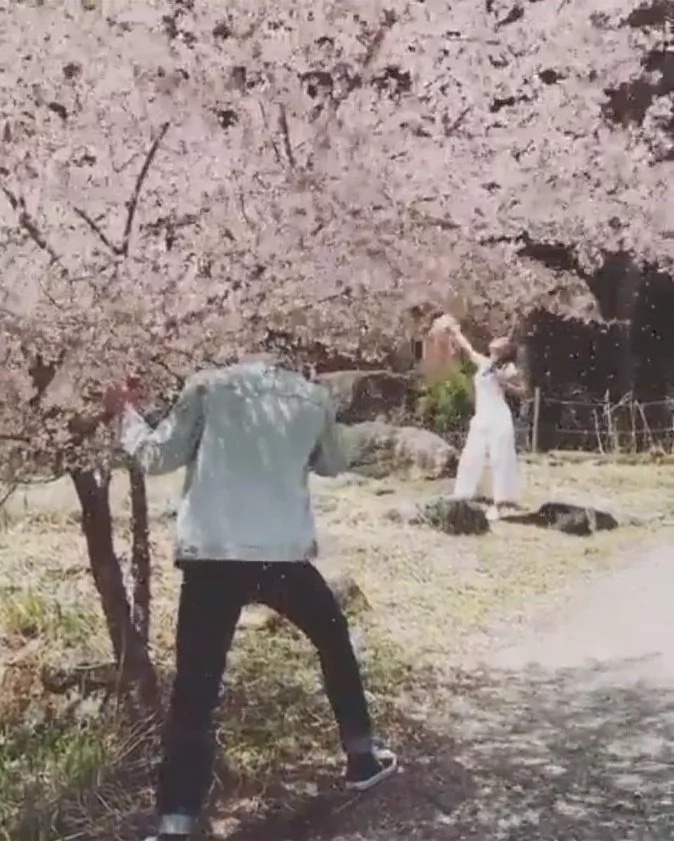 daniel-sakura