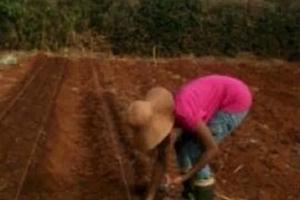 After leaving Citizen TV recently, SEXY presenter becomes a professional farmer (photos)
