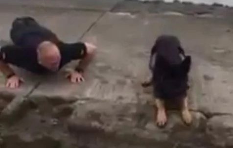 Watch: This fuzzy policeman does pushups like a real officer of the force