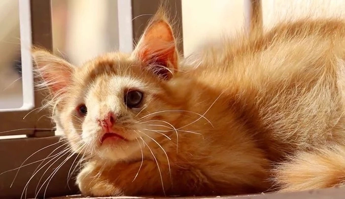 Kitty Abandoned For Being 'Too Ugly', Finally Finds Someone Who Saw His Beauty