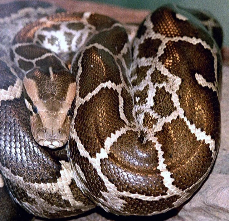 The reason why this woman's pet snake was losing weight will scare you!
