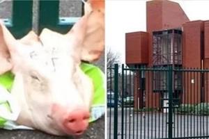 Encontraron la cabeza de un cerdo atada a la puerta de una escuela islámica