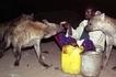 Unfathomable! Meet Ethiopian 'hyena-men' who hand-feed hyenas every night unstirred