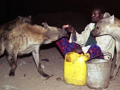 Unfathomable! Meet Ethiopian 'hyena-men' who hand-feed hyenas every night unstirred