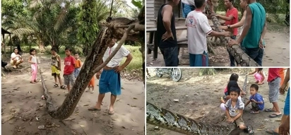 Villager wrestles and kills huge 7-meter python that left him hospitalized