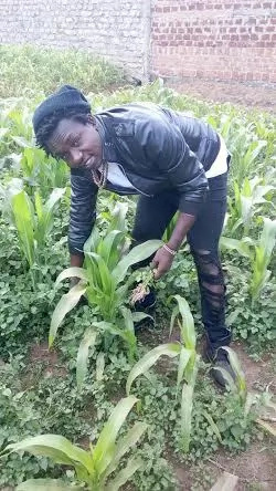 Popular city musician shows off his ten-acre farm after venturing in farming (photo)