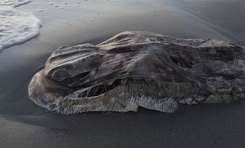Monster from the deep! Huge blob creature washes up on beach leaving everyone baffled (photos)