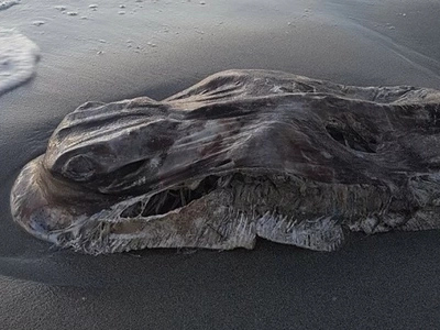 Shocking sea monster leaves people questioning who it belongs to (photos)