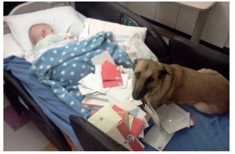 Dad Notices Rescue Dog Acting Strange With Son, Who Is Passing Away. That's When He Understands…