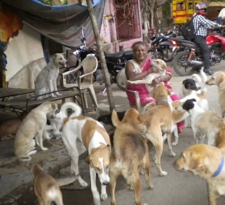 Woman, 65, who can barely support herself, takes care of over 400 STRAY DOGS (photos)
