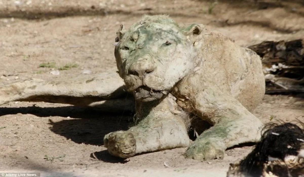 ¡El peor zoológico del mundo!, habitado por animales muertos