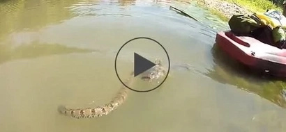 WATCH: Water snake vs. giant catfish – guess who won?