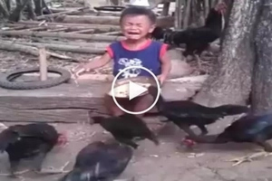 Gutom na gutom! Scary chickens in Baguio attack and steal food from helpless toddler
