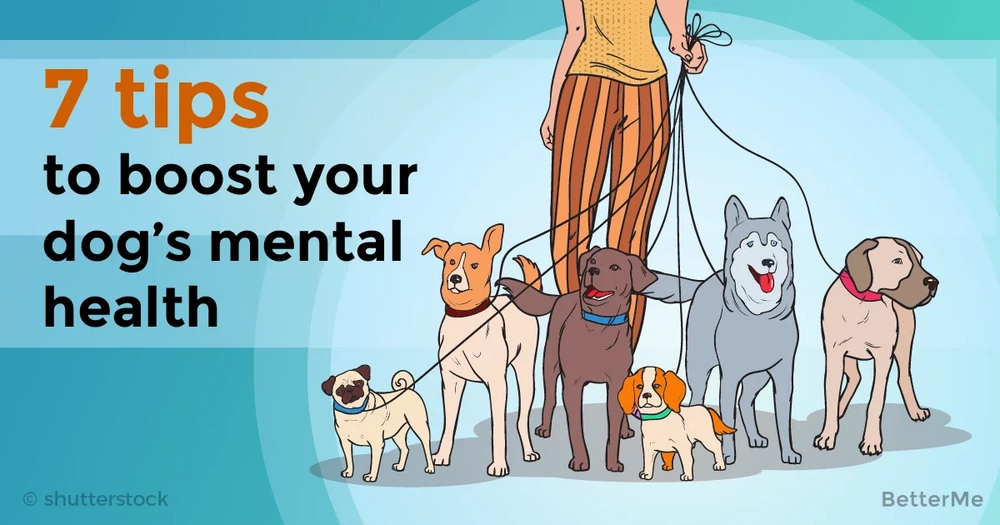 7 tips that can help you boost your dog's mental health