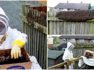 Buzz! Family comes home to find HUGE swarm of 12,000 bees in their garden (photos)