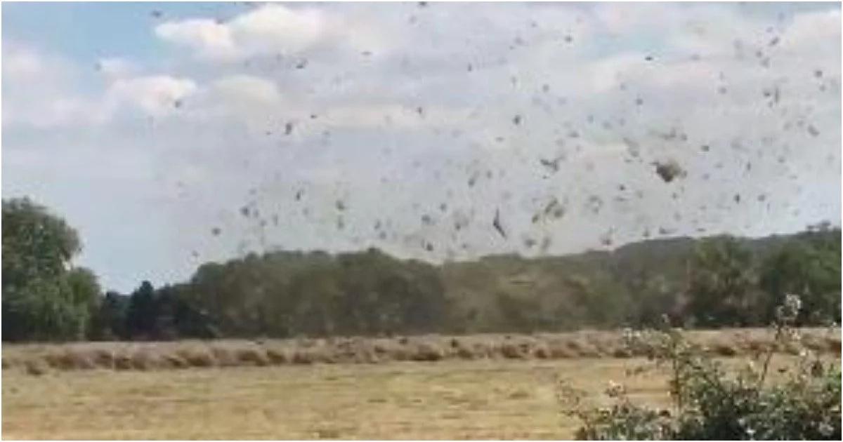 Police capture weird 'tornado' on film that left farmer upset