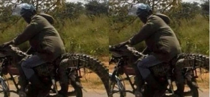 Keyan man steals a crocodile, sits on it as he carries it away on his motorbike