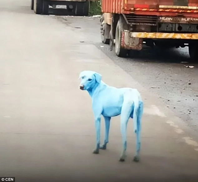 Shock as stray dogs turn blue after drinking and bathing in river where industrial wastes were being dumped