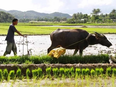 Agriculture should be priority as PH hunger rises
