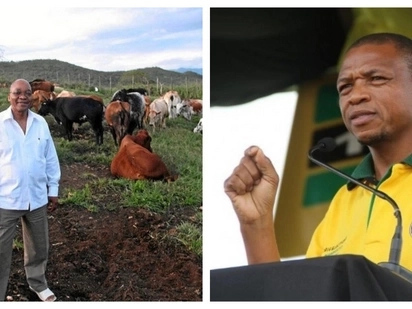Hawks to probe Supra's R1.5 million cattle gift to Zuma