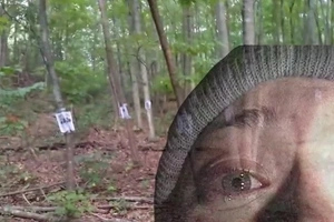 This guy stumbled upon a creepy shrine in the forest