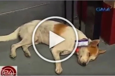 ID-wearing stray dog 'Enzo' gets love and recognition