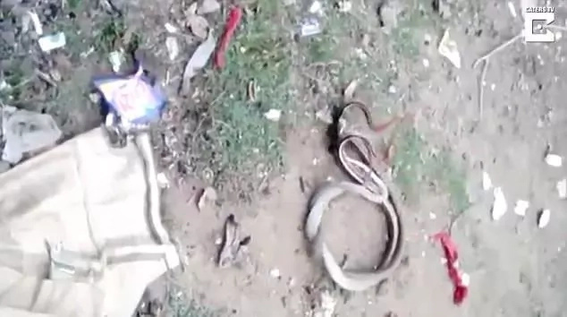 Villagers encounter snakes in LOVE, cover them with saris to give them privacy (photos, video)