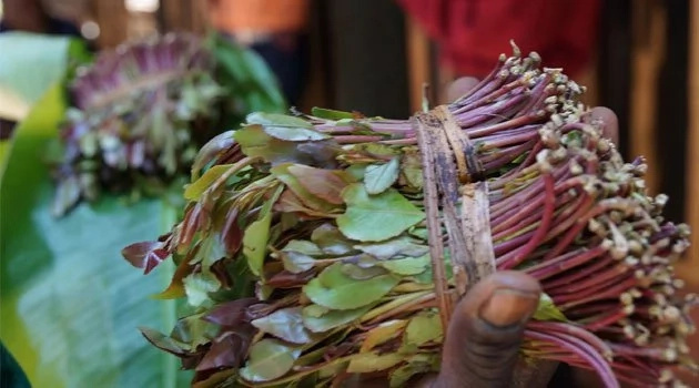 This is what will happen when politician use Miraa as their party symbol