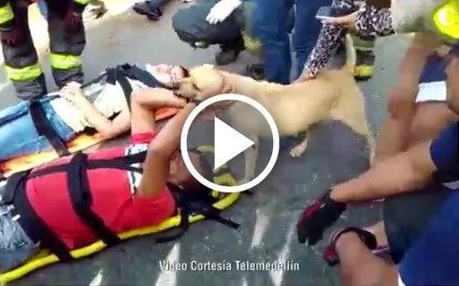 Perro ayudó a su amo durante dramático accidente