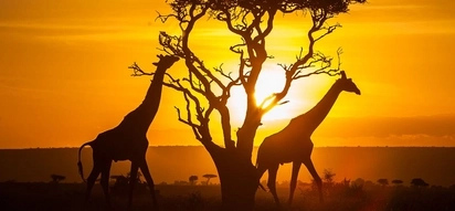 5 totally unique things about Kenya that will fill you with pride
