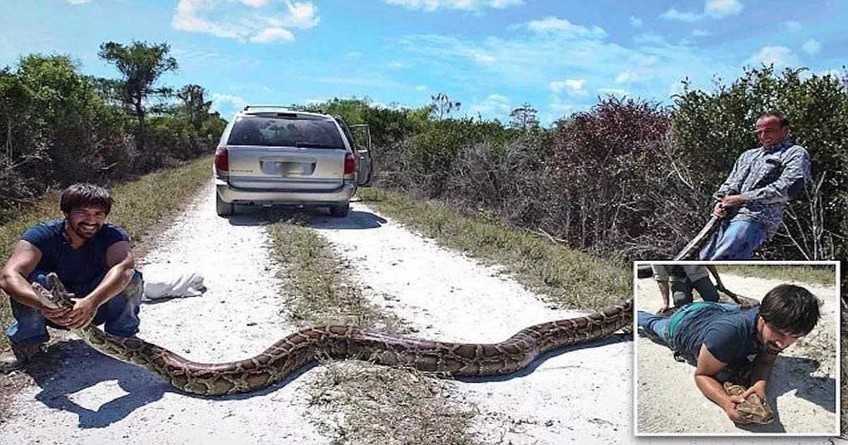 You won't believe the huge 4.5m python that was captured by hunters (photos, video)