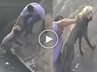 Helpless Dog Was Survived from Death by this Brave Man! Watch this Dramatic Moment!